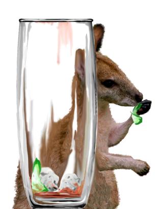 Wallaby 14 33%
