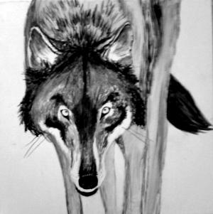 Wolf 01 66%